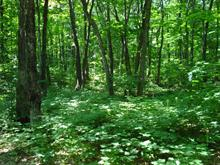 Lot for sale in Mont-Tremblant, Laurentides, Chemin du Franc-Nord, 24892845 - Centris