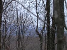 Terre à vendre à Labelle, Laurentides, Chemin  Lacoste, 9315639 - Centris