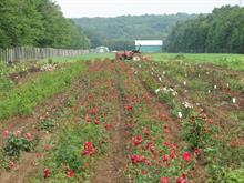Terre à vendre à Portneuf, Capitale-Nationale, 457, Route du Coteau-des-Roches, 24310199 - Centris