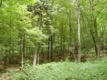 Lot for sale in Saint-Faustin/Lac-Carré, Laurentides, 04, Chemin  Wilfrid, 11640784 - Centris