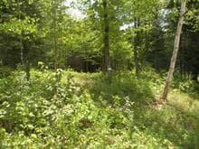 Terrain à vendre à Saint-Faustin/Lac-Carré, Laurentides, Allée du Centre, 26252071 - Centris