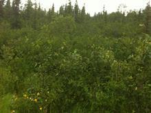 Terrain à vendre à Rouyn-Noranda, Abitibi-Témiscamingue, Route des Pionniers, 13138889 - Centris