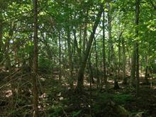 Lot for sale in Harrington, Laurentides, Chemin de la Petite-Rivière, 13107816 - Centris