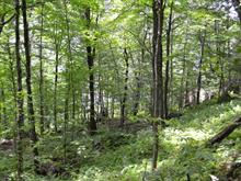 Lot for sale in Lac-Sergent, Capitale-Nationale, Chemin des Pins, 21417641 - Centris