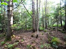 Terrain à vendre à Beaulac-Garthby, Chaudière-Appalaches, Route  112, 27551216 - Centris