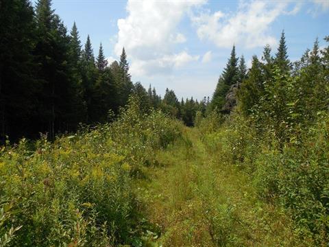 Terre à vendre à Saint-Nazaire-de-Dorchester, Chaudière-Appalaches, 90, 4e Rang Nord, 25863187 - Centris