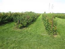 Terre à vendre à Auteuil (Laval), Laval, boulevard des Mille-Îles, 10296377 - Centris