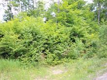 Lot for sale in Saint-Élie-de-Caxton, Mauricie, Chemin de l'Amitié, 21167209 - Centris