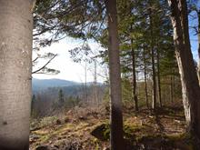 Lot for sale in Val-Morin, Laurentides, Rue de la Rivière, 16428994 - Centris