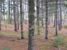 Land for sale in Saint-Adelphe, Mauricie, Rue du Moulin, 20083323 - Centris