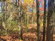 Terrain à vendre à Saint-Joseph-de-Coleraine, Chaudière-Appalaches, Chemin du Lac-Bisby, 11701131 - Centris