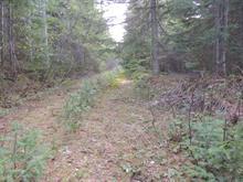 Terrain à vendre à Gaspé, Gaspésie/Îles-de-la-Madeleine, boulevard de Douglas, 9960433 - Centris