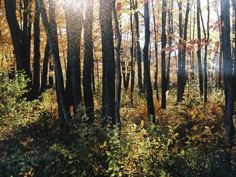 Terre à vendre à Saint-Valère, Centre-du-Québec, 31C, Route  Piché, 22238520 - Centris