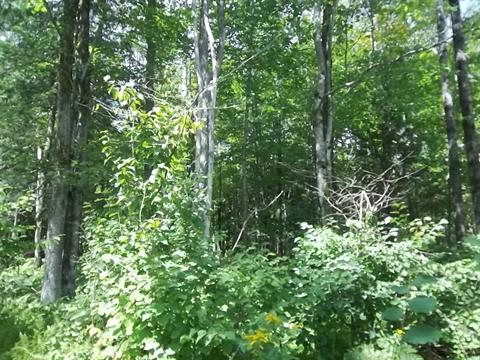 Land for sale in Ham-Sud, Estrie, Chemin de Saint-Camille, 21091974 - Centris