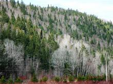 Land for sale in Matane, Bas-Saint-Laurent, Route du Centre-de-Ski, 25671586 - Centris