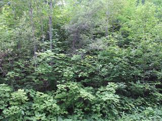 Lot for sale in Denholm, Outaouais, 7, Chemin du Poisson-Blanc, 20409033 - Centris.ca
