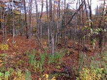 Terrain à vendre à Montcalm, Laurentides, Chemin du Lac-du-Brochet, 24943850 - Centris.ca