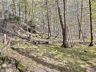 Terrain à vendre à Lac-Sainte-Marie, Outaouais, Chemin  Lemens, 25028375 - Centris.ca