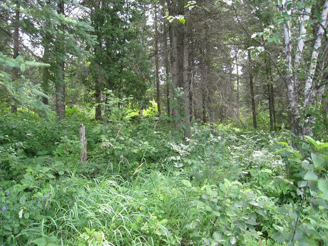 Terrain à vendre à Ferme-Neuve, Laurentides, Chemin  Nibi, 20930653 - Centris.ca