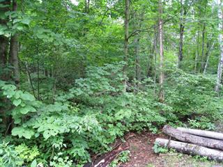 Lot for sale in Ferme-Neuve, Laurentides, Chemin  Nibi, 27044455 - Centris.ca