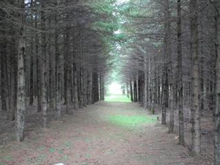 Terre à vendre à Saint-Ubalde, Capitale-Nationale, Rang  Saint-Achille, 25423828 - Centris.ca