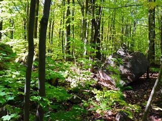 Land for sale in Rigaud, Montérégie, Chemin  Marie-Louise, 18067282 - Centris.ca