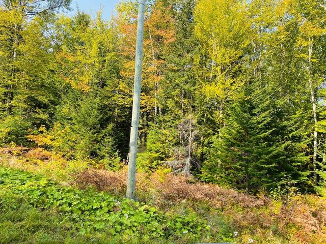 Lot for sale in Hébertville, Saguenay/Lac-Saint-Jean, 1, Chemin du Tour-du-Lac-Gamelin, 25234799 - Centris.ca