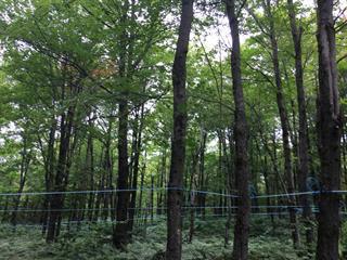 Terre à vendre à Sainte-Cécile-de-Whitton, Estrie, 821, Route  263, 14185963 - Centris.ca