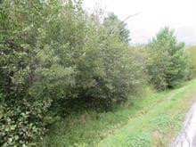Terrain à vendre à Ascot Corner, Estrie, Chemin de la Rivière, 10105381 - Centris.ca