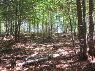 Lot for sale in Saint-Aimé-du-Lac-des-Îles, Laurentides, 925, Route  309, 24696088 - Centris.ca
