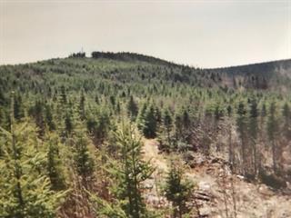 Terre à vendre à Saint-Philémon, Chaudière-Appalaches, Route  281, 12437073 - Centris.ca