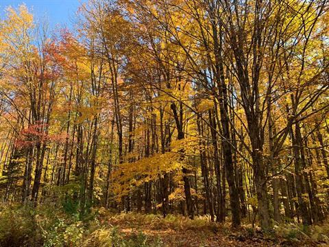Terre à vendre à Stukely-Sud, Estrie, 483A, Chemin du Golf, 17746410 - Centris.ca