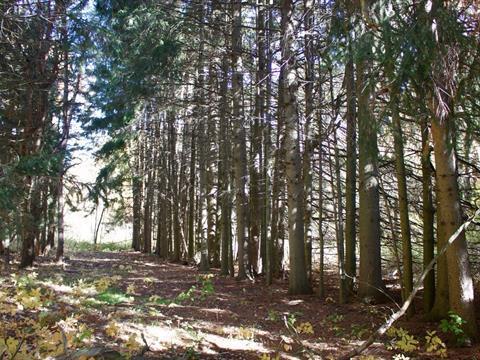 Terrain à vendre à Contrecoeur, Montérégie, Route  Marie-Victorin, 22304656 - Centris.ca