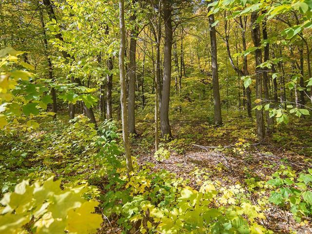 Terrain à vendre à Saint-Jean-de-l'Île-d'Orléans, Capitale-Nationale, Chemin du Moulin, 22027492 - Centris.ca