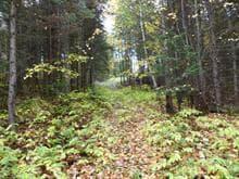 Land for sale in Saint-Athanase, Bas-Saint-Laurent, Chemin de la Rivière-Noire, 21266122 - Centris.ca