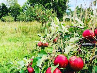 Farm for sale in Sainte-Justine-de-Newton, Montérégie, 3651, 4e Rang, 28595329 - Centris.ca