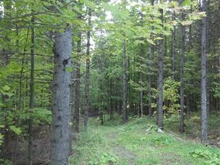 Land for sale in Cookshire-Eaton, Estrie, Chemin  Jordan Hill, 13495343 - Centris.ca