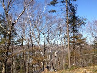 Terrain à vendre à Lévis (Les Chutes-de-la-Chaudière-Ouest), Chaudière-Appalaches, 373, Chemin  Forestier, 12568989 - Centris.ca