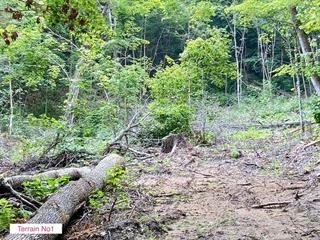 Lot for sale in Trois-Rives, Mauricie, 1, Chemin  Frigon, 23227173 - Centris.ca