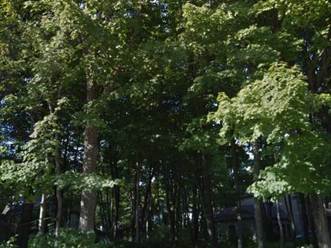 Lot for sale in Québec (La Haute-Saint-Charles), Capitale-Nationale, 4378, Rue  Beaubien, 15719660 - Centris.ca
