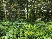 Lot for sale in Chute-Saint-Philippe, Laurentides, Chemin du Lac-Pérodeau, 18398253 - Centris.ca