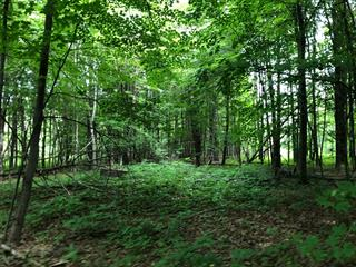 Lot for sale in Cantley, Outaouais, 8, Rue  Maple, 19026418 - Centris.ca