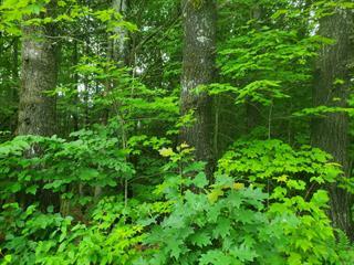 Lot for sale in Chichester, Outaouais, 1, Chemin  Birch Creek, 11235472 - Centris.ca