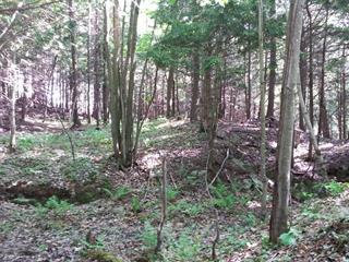 Terrain à vendre à Brownsburg-Chatham, Laurentides, Rue des Bois-Francs, 19324628 - Centris.ca