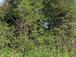 Terrain à vendre à Val-Racine, Estrie, Chemin de Piopolis, 23966429 - Centris.ca
