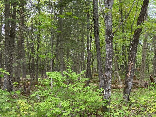 Terrain à vendre à Lac-Supérieur, Laurentides, Chemin des Alouettes, 20043224 - Centris.ca