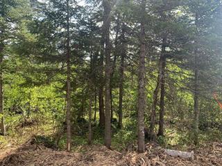 Terrain à vendre à Val-Racine, Estrie, Chemin de Piopolis, 27652828 - Centris.ca