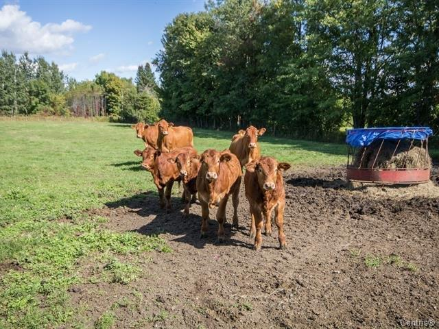 Hobby farm for sale in Lachute, Laurentides, 41 - 41A, Chemin  Saint-Jérusalem, 28105338 - Centris.ca