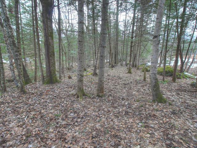 Land for sale in Saints-Martyrs-Canadiens, Centre-du-Québec, 301, Route  161, 15529029 - Centris.ca
