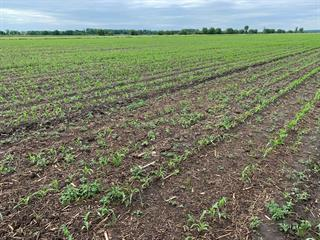Terre à vendre à Saint-Germain-de-Grantham, Centre-du-Québec, 8e Rang, 22004745 - Centris.ca